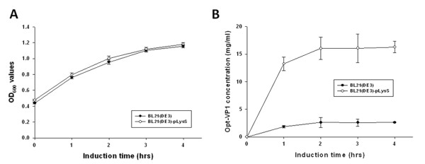 Growth kinetics and production profiles of GST-opt-VP1 protein in E. coli BL21(DE3)-pLysS and BL21(DE3) . (A) Growth profile of BL21(DE3) and BL21(DE3)-pLysS in LB medium during post-induction. (B) The production profiles of the E. coli strains, (B)BL21(DE3)-pLysS, and BL21(DE3) containing pGEX-4T-1-Opt-VP1 are shown after induction.