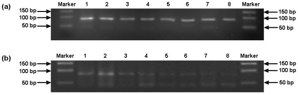 Comparison of one-step SYBR Green I RT-PCR with conventional RT-PCR for dectecting BVDV RNA of titrated viruses at 10-fold serial dilutions . (a) 2.5% agarose gel electrophoresis of the amplified products with a length of 84 bp obtained by one-step SYBR Green I RT-PCR. Marker: 50 bp DNA Marker, Lane 1: 100 TCID 50 , Lane 2: 10 TCID 50 , Lane 3: 1 TCID 50 , Lane 4: 10 -1 TCID 50 , Lane 5: 10 -2 TCID 50 , Lane 6: 10 -3 TCID 50 , Lane 7: 10 -4 TCID 50 , Lane 8: 10 -5 TCID 50 . (b) 2.5% agarose gel electrophoresis of the amplified products with a length of 84 bp obtained by conventional RT-PCR. Marker: DNA Marker DL 500, lane 1: 100 TCID 50 , lane 2: 10 TCID 50 , lane 3: 1 TCID 50 , lane 4: 10 -1 TCID 50 , lane 5: 10 -2 TCID 50 , lane 6: 10 -3 TCID 50 , lane 7: 10 -4 TCID 50 , lane 8: 10 -5 TCID 50 .