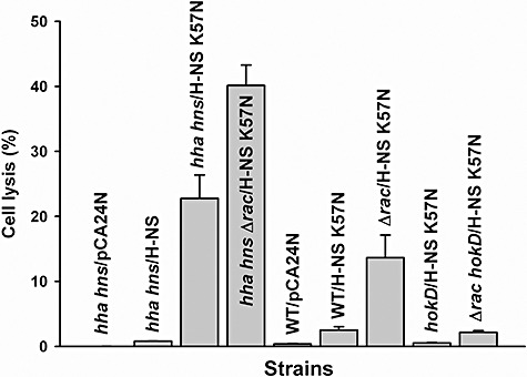 Cell lysis by H‐NS K57N in wild‐type BW25113 (WT), BW25113 hha hns ( hha hns ), BW25113 Δ rac (Δ rac ), BW25113 hokD ( hokD ) and BW25113 Δ rac hokD (Δ rac hokD ) in LB at 37°C after 11 h. Extracellular DNA (eDNA) and intracellular DNA (iDNA) were quantified by qPCR using reference gene purA via the purA‐f and purA‐r primers. Cell lysis was calculated by dividing the amount of eDNA by the sum of eDNA and iDNA. Each data point is the average of at least four replicates from two independent cultures, and one standard deviation is shown. H‐NS K57N and H‐NS were produced using 1 mM IPTG.