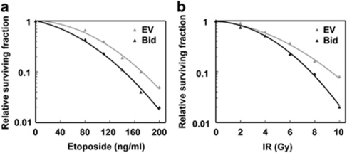 Bid can contribute to clonogenic cell death in response to etoposide and IR. ( a , b ) P53-RNAi Bid −/− MEFs carrying an empty vector (EV) or stably expressing WT Bid were exposed to the indicated dosages of etoposide ( a ) or IR ( b ). Surviving colonies were counted 14 days post-treatment. The relative surviving fraction is plotted against the dose of etoposide or IR. Data presented are representative of two independent experiments.