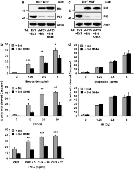Bid uses its BH3 domain to indirectly activate Bax and/or Bak during etoposide- and IR-induced apoptosis. p53-RNAi Bid −/− MEFs were transduced (Td) to stably express WT Bid, the Bid G94E mutant or the Bid G94A mutant. ( a , c ) Downregulation of p53 by RNAi and Bid protein expression from the introduced vectors were validated by immunoblotting, where actin served as a loading control. ( b ) p53-RNAi Bid −/− MEFs expressing WT Bid or Bid G94E were exposed to the indicated dosages of etoposide or IR, or to TNFα in combination with cycloheximide (CHX) as a validation of the Bid G94E mutant. Apoptosis levels were determined as the percentage of cells with cleaved caspase-3 after 24 h (etoposide), 48 h (IR) or 5 h (TNFα+CHX). Background apoptosis levels, as those observed in p53-RNAi Bid −/− MEF carrying EV2, were subtracted from obtained values for all stimuli. ( d ) p53-RNAi Bid −/− MEFs expressing WT Bid or Bid G94A were exposed to the indicated dosages of etoposide or IR and apoptosis was read out as outlined in ( b ). Data in ( b ) and ( d ) are expressed as means of three independent experiments±s.d. Statistically significant differences between values of WT Bid and Bid G94E are indicated in ( b ) for * P