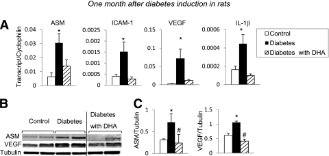 Effect of DHA-supplemented diet on short-term diabetes-induced changes in rat retina. Retinas isolated 1 month after induction of diabetes were analyzed by quantitative PCR and Western blotting for inflammatory/angiogenic molecule expression levels. Quantitative PCR analysis of ASM, ICAM-1, VEGF, and IL-1β ( A ) from retinas isolated from rats on standard diet (control, white bar ; diabetic, black bar) and a DHA-enriched diet (diabetic, striped bar) is shown. The results are means ± SE from three independent sets of animals, with five to eight animals in each group. * P