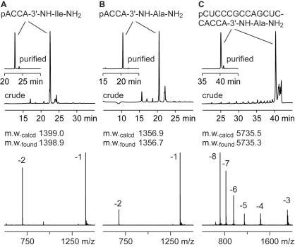 Synthesis of RNA-peptide conjugates based on the modified solid supports 9 and 10 . Anion-exchange HPLC profiles of crude and purified (insets) conjugates S7 , S4 , and S6 ( A – C , upper panels) and LC-ESI mass spectra of purified products ( A – C , lower panels). Anion-exchange chromatography conditions: Dionex DNAPac®PA-100 (4 × 250 mm) column; temperature: 60 °C; flow rate: 1 mL/min; eluant A: 25 mM Tris–HCl (pH 8.0), 6 M urea; eluant B: 25 mM Tris–HCl (pH 8.0), 6 M urea, 500 mM NaClO 4 ; gradient: 0–35% B in A within 30 min; UV detection at 260 nm.