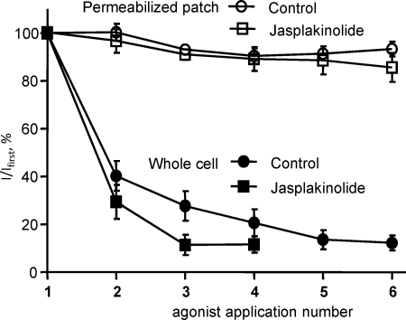 Stabilization of the actin cytoskeleton by jasplakinolide does not prevent the rundown of P2X1 receptor-mediated currents in the whole cell recording configuration. In the permeabilized patch recording configuration, which supports intracellular signaling pathways, reproducible α,β-meATP (10 μ m )-evoked currents were observed every 5 min both for control cells and cells treated with jasplakinolide (30 n m , 1 h) to stabilize the actin cytoskeleton. In the whole cell recording configuration P2X1 receptor currents decreased in amplitude following repeated application of agonist at 5-min intervals. This rundown was unaffected by jasplakinolide treatment.