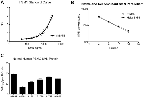 ELISA Performance, parallelism and detection of SMN in human PBMCs. A : The recombinant hSMN standard curve data developed from N = 6 curves were highly reproducible with standard deviations of about ±0.23 OD unit variations. The dotted lines surrounding the dose-response curve represent 2 standard deviations. B : Comparison of SMN signal detection between recombinant human SMN (dilutions from 1∶4 to 1∶256) and SMN extracted from HeLa cell lysates (1∶4–1∶32) revealed a high degree of parallelism between reagents, allowing for accurate evaluation of native SMN protein using the recombinant SMN ELISA standard. C : The SMN ELISA detected protein in adult donor PBMCs; values ranged from 86 to 229 pg SMN per well at a dilution of 1∶4 and an average of 70.2 pg SMN protein per 10 6 cells. 10 7 PBMCs diluted 1∶4 through 1∶32 produced linear SMN protein levels. Even with only N = 6 normal samples, SMN levels in PBMCs varied by nearly 3-fold. Error bars represent standard deviations.