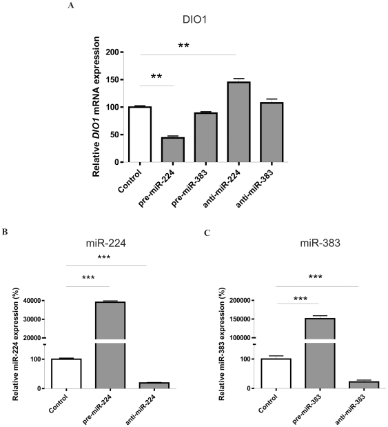 <t>miR-224</t> regulates endogenous DIO1 expression in Caki-2 cell line. A. Expression of DIO1 mRNA in the Caki-2 cell line. Cells were transfected with 37.5 <t>pmoles</t> of pre-miRs, anti-miRs or scrambled pre-miR (negative control); after 48 h total RNA was extracted for subsequent SQ-PCR analysis of DIO1 level. The expression is shown as percentage of control (cells transfected with scrambled microRNA). Data are given as mean ± SEM. Data were analyzed by ANOVA followed by Dunnett's multiple comparison test. ** p