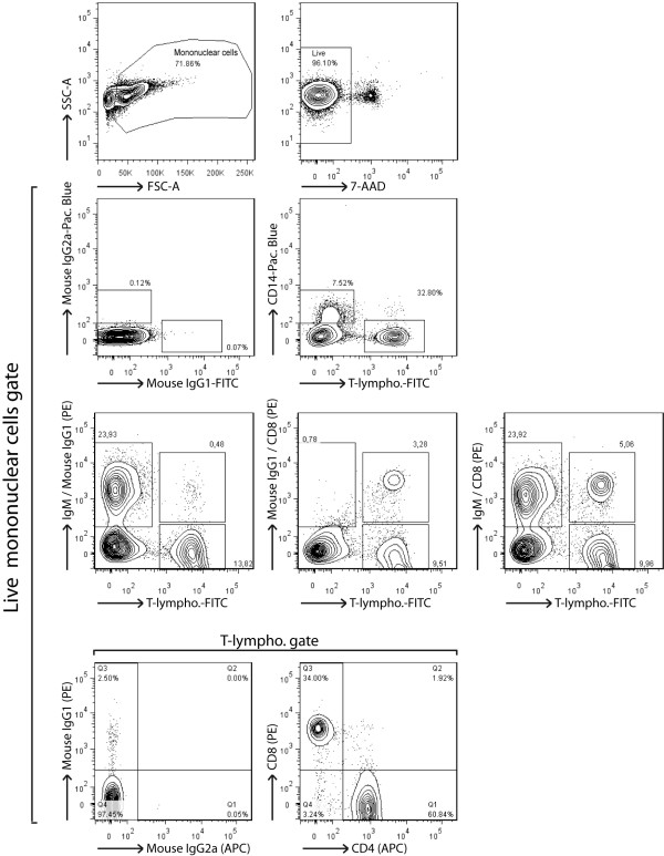Analysis of rabbit peripheral blood mononuclear cells by multi-colour flow cytometry . PBMC were isolated from K 3 EDTA-sampled blood of naive rabbits before five-colour flow cytometry analysis. Specific detection of monocytes, B cells and T cell subsets consisted in a 3-step staining procedure. PBMC were first stained with anti-rabbit IgM (or mouse IgG1 isotype control), anti-rabbit CD8 (or mouse IgG1 isotype control) and anti-rabbit CD4 (or mouse <t>IgG2a</t> isotype control). Stainings were revealed with PE-conjugated rat anti-IgG1 or <t>biotinylated</t> rat anti-IgG2a, as secondary staining. Final staining was performed with streptavidin-APC, FITC-conjugated anti-rabbit T lymphocytes (or FITC-conjugated mouse IgG1 isotype control) and anti-human CD14 (or Pacific Blue-conjugated mouse IgG2a isotype control). Live lymphocytes were gated on 7-AAD - cells.