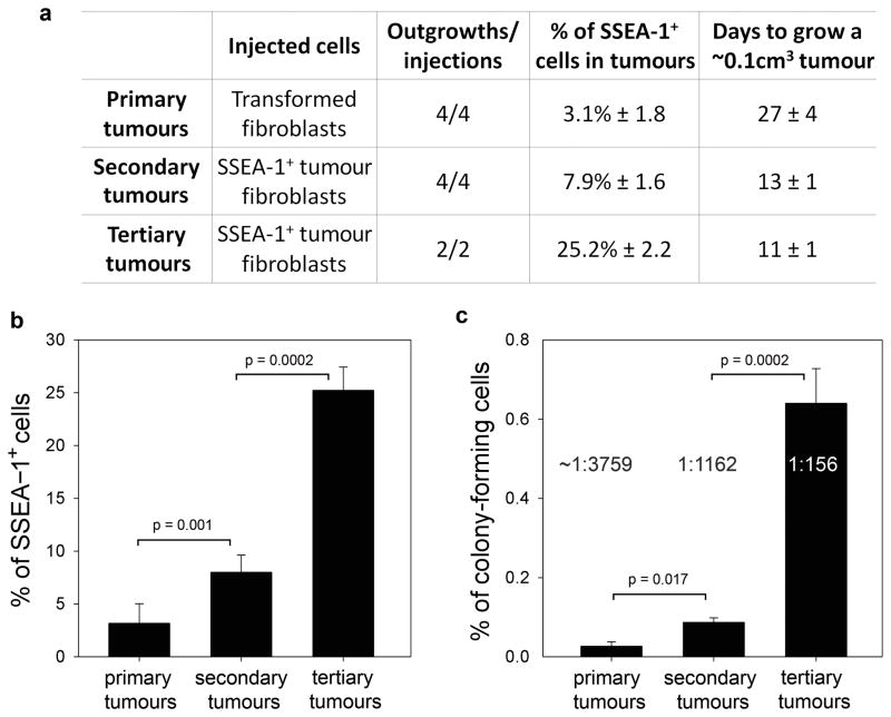 Self-renewal ability of SSEA-1 + transformed fibroblasts ( a ) Serial transplantation of SSEA-1 + fibroblasts in BALB/cAnNCr- nu/nu mice. 3 × 10 6 cells were injected for all passages. ( b ) Percentages of SSEA-1 + cells in the indicated samples measured by flow cytometric analysis. Values represent mean ± s. d. from 2 to 6 tumours. Statistical significance of the differences is indicated. ( c ) Quantitative analysis of soft agar assay using unsorted cells from primary, secondary and tertiary tumours. The frequency of clonogenic cells is indicated. Values represent mean ± s. d. from three replicates. Statistical significance of the differences is indicated.
