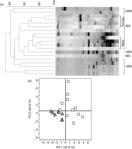 (a) Dendrogram showing the DGGE profiles of the IBS and nIBS faecal bacterial communities. Community DNA was detected by PCR amplification with universal bacterial 16S rRNA gene (V3–V5 regions) primers followed by DGGE. The dendrogram was constructed using D sc and the UPGMA algorithm. The arrow indicates the eluted band of Eubacterium biforme . (b) PCA of DGGE fingerprints of the 16S rRNA gene of dominant bacteria in IBS (□) and nIBS (▴) samples.