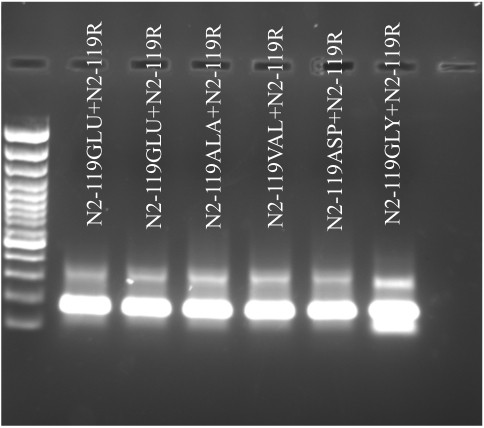 Generation of double stranded DNA templates using paired synthetic long oligos . After 5 cycles of PCR, the products were run on 2% agarose gel. The formation of ~170 bp of product can be clearly visualized.