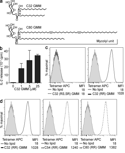 CD1b tetramers stain human αβ T cells. (a) Bacterial GMM is formed by glucose linked at the 6-position to a mycolyl unit that contains two chiral centers, which are in the R configuration at positions 2 and 3 (2 R , 3 R ). (b) Tetramerizable CD1b monomers were used in plate-bound antigen presentation experiments to measure IL-2 release by the CD1b-restricted human T cell line LDN5 in response to C32 GMM loaded overnight at 37°C (mean + SEM). (c) CD1b was loaded with GMMs that are naturally formed with R configuration at C2 and C3 (R, R) or synthetic GMM prepared with an S configuration at C2 or C3 (2 R ,3 S +2 S ,3 R ) and complexed to streptavidin-labeled APC (tetramer APC) and tested for staining LDN5 T cells. (d) CD1b tetramers were then loaded with GMMs of the indicated average chain length (C32, C54, or C80) and tested for staining LDN5. MFI is mean fluorescence intensity. Data are representative of three or more experiments.