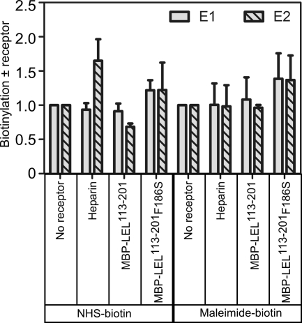 CD81 or heparin binding in isolation does not affect the oxidation state of E1 or E2. HCVpp were incubated with heparin sodium salt, dimeric MBP-LEL(113–201), or mutant MBP-LEL(113–201)F186S prior to purification and labeling with maleimide- or NHS-biotin. Particles were lysed and reduced by addition of DTT then applied to streptavidin agarose for capture of biotinylated proteins. Samples were run on reducing SDS-PAGE and Western blotted with anti-E2 and anti-E1 mAbs (H52 and A4, respectively). The ratio of maleimide-biotin and NHS-biotin labeling was calculated for E1 and E2 ± heparin, MBP-LEL(113–201), and MBP-LEL(113–201)F186S by densitometry analyses of Western blots produced from three independent experiments (means ± S.E.).