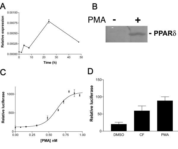 PPARδ expression and activity is increased by phorbol ester. A: Time course of induction of PPARδ message in response to phorbol ester. THP-1 cells were plated in RPMI medium supplemented with 10% FCS and 1 nM PMA at a density of 1 × 10 6 per well. At each time point, cells were lyzed and RNA prepared, followed by cDNA synthesis. QPCR analysis was performed using PPARδ-specific primers and probe to determine the amount of message. Results are expressed as total relative to 18S and were performed in triplicate. B: Expression of PPARδ protein by THP-1 cells is up-regulated in response to phorbol ester. THP-1 cells were plated in RPMI medium supplemented with 10% FCS and either 1 nM PMA or vehicle and incubated for 48 h. Cells were then lyzed directly into SDS-PAGE sample buffer for Western blotting. Blots were probed using a rabbit polyclonal anti-serum raised against a GST-PPARδ AB domain fusion protein. C: COS-1 cells were transiently co-transfected with pFABPLuc and pCLDNhPPARδ. Transfection efficiency was controlled for by co-transfection with a plasmid encoding β-galactosidase. Cells thus transfected were treated with increasing concentrations of PMA for 24 h after which luciferase activity was measured. D: PMA-induced δ-activation is mediated through the ligand binding domain. COS-1 cells were transfected with an expression vector encoding a Gal-4/PPARδ ligand-binding domain chimera. Cells were then treated for 24 h with compound F, PMA or vehicle only and luciferase readings obtained.