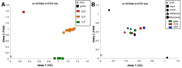 Allelic specificity of CTCF and H3K9me3 . Informative ChIP templates were analyzed using the TaqMan allelic discrimination assay to address the allelic association of CTCF and H3K9me3. (A) Genotyping results at rs11870560 identify informative cell lines useful for the detection of allele-specific association of CTCF and H3K9me3. gDNA obtained from monoallelic and biallelic cell lines were genotyped using the TaqMan allelic discrimination assay. Squares represent gDNA samples and are coded in red and green to represent cell lines that are homozygous for allele C and allele T, respectively. Orange indicates heterozygous individuals. Averaged triplicate of a no-template control (NTC) is shown near the origin of the graph. (B) Genotyping at SNP rs11870560 with DNA templates recovered from ChIP experiments was used to identify the enrichment of the two alleles with either CTCF (circle) or H3K9me3 (triangle). Each color shown in the figure key represents a lymphoblastoid cell line (LCL) derived from an individual of the pedigree, while the shape represents the source of each sample (for example, squares signify input samples, while circles and triangles indicate ChIP samples obtained with CTCF and H3K9me3 antibodies, respectively). Immunoprecipitated templates were generated using the ChIP protocol described in Materials and Methods. Both monoallelic and biallelic cell lines indicate biallelic distribution of both CTCF and H3K9me3. Diamonds indicate control LCL samples (standards) previously genotyped as homozygous CC, heterozygous CT and homozygous TT.