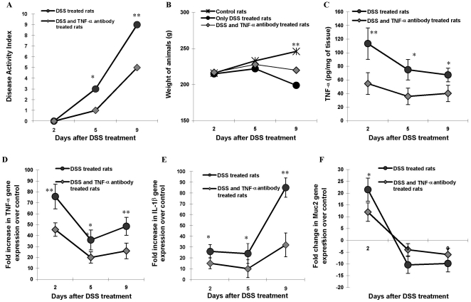 The effect of TNF-α neutralizing antibody treatment on disease onset and progression in DSS induced colitis. A : Comparison of disease activity index (DAI) on day 2, 5 and 9 of DSS treatment in animals that received 5% DSS in drinking water alone (black circles) or with TNF-α neutralizing antibody (grey diamonds). B : Body weight change plotted for control (asterisks), DSS only (black circles) or DSS + TNF-α neutralizing antibody treatment (grey diamonds). Data represents the means ± SEM from 6 animals per day. C : TNF-α protein secretion measured by ELISA on days 2, 5 and 9 of DSS treatment in animals that received 5% DSS in drinking water alone (black circles) or with TNF-α neutralizing antibody (grey diamonds). Data shown are the means ± SEM of 6-animals/day. * P