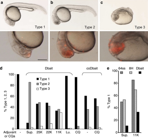 Phenotypes 24 h after Dbait injection into the extracellular space of cell stage 1 K zebrafish embryos. ( a – c ) Lateral views anterior to th e left of zebrafish embryos, 24 h after <t>Dbait-cy3+polyethylenimine</t> <t>(PEI)</t> injection (2–5 nl) at the animal pole of cell stage 1 K zebrafish embryos: top panel, bright field view; bottom panel, 2 × magnification of the head region with epifluorescence overlay showing in red Dbait-cy3, scale bar 250 μm. ( a ) Type 1 phenotype indistinguishable from non-injected (not shown). ( b ) Type 2 mild phenotype with extensive cell death in the head region. ( c ) Type 3 strong teratogenesis and widespread cell death. ( d ) Histogram showing the percentage of the three phenotypic classes depending on the adjuvant. More than 100 embryos were analyzed for each condition. Sup: Superfect; 25, 22, 11 K PEI of the corresponding size; Lu, Lutrol; CQ, chloroquine; '−', without adjuvant. ( e ) Histogram showing the percentage of the animals with type 1 phenotype after injections of nanoparticules formed with 8H, 64ss or Dbait32H and Superfect or PEI11K. The Dbait32H, and the 8H and 64ss inactive nanoparticules, were used at equivalent adjuvant concentrations.
