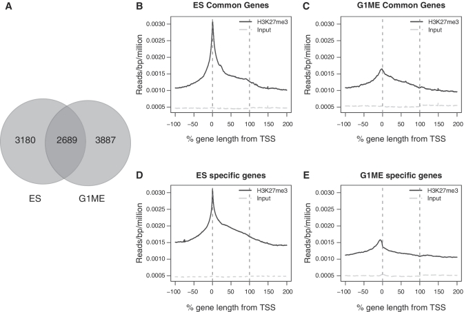 Profiles of genes exclusive and commonly marked by H3K27me3 in ES and G1ME cells. ( A ) The Venn diagram shows the overlap between the marked genes in ES cells and G1MEs. ( B and C ) ASE plots of H3K27me3 signal for the 2689 genes that are enriched for H3K27me3 in ES and G1ME. In each plot, the red lines denote the boundaries of the gene and the level of signal in the input control is plotted (grey line). ( D and E ) ASE plots of H3K27me3 signal for cell type-specific genes (the number of genes differs for each cell line: ES cells = 3180, G1MEs = 3887).