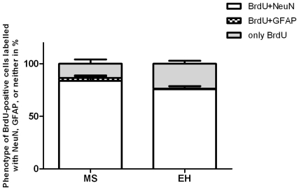 Phenotypes of BrdU positive cells labelled with NeuN, GFAP or neither in kindled MS and EH rats (p