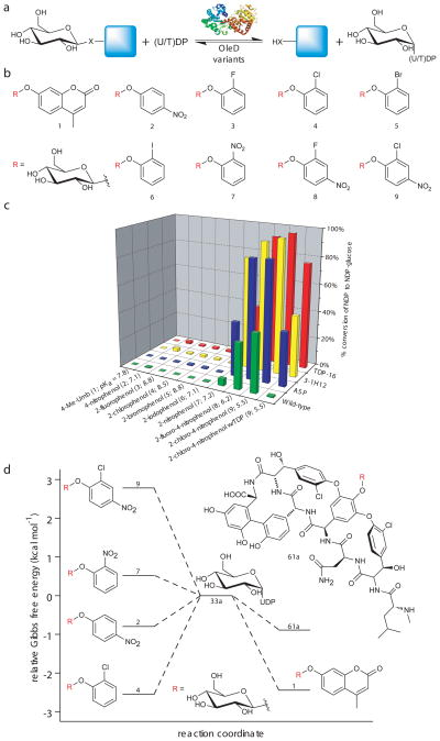 Evaluation of putative donors for sugar nucleotide synthesis. ( a ) General reaction scheme. ( b ) Structures of the β-D-glucopyranoside donors which led to (U/T)DP-glucose formation. ( c ) Percent conversion of (U/T)DP to (U/T)DP-glucose with various donors (n ≥ 2, standard deviation ≤ 5%). Reactions contained 2.1 μM (10 μg) OleD variant, 1 mM of (U/T)DP, and 1 mM of aromatic donor ( 1–9 ) in Tris-HCl buffer (50 mM, pH 8.5) with a final volume of 100 μl. After one hour at 25°C, reactions were flash frozen and analyzed by HPLC ( Supplementary Methods ). The pK a for each corresponding donor aglycon is highlighted in parentheses. ( d ) Plot depicting the relative Gibbs free energy of selected donors/acceptors in relation to 33a . Small glycoside donors display large shifts in relative free energy, transforming formation of UDP-Glc ( 33a ) from an endo- to an exothermic process. The ΔG° pH8.5 for 1 , 2, 4, 7, and 9 with UDP in Tris-HCl buffer (50 mM, pH 8.5) at 298K relative to 33a were determined in this study ( Supplementary Methods ). The ΔG° for 61a was previously determined (at pH 9.0 and 310K) ( 5 ) .
