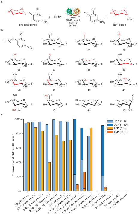 The synthesis of sugar nucleotides from 2-chloro-4-nitrophenyl glucosides. ( a ) General reaction scheme. ( b ) Structures of 2-chloro-4-nitrophenyl glycoside donors evaluated for D-sugars within this series, the differences between each member and the native OleD sugar substrate (β-D-glucose) are highlighted in red. ( c ) Maximum observed percent conversion of (U/T)DP to (U/T)DP-glucose within a 21 hour time course assay for each donor (n ≥ 2, standard deviation ≤ 5%). Standard reactions contained 7 μM TDP-16, 1 mM (U/T)DP, and 1 mM of 2-chloro-4-nitrophenyl glycoside donor ( 9 , 34 – 47 ) in Tris-HCl buffer (50 mM, pH 8.5) with a final volume of 300 μl. Over 21 hours at 25°C, aliquots taken at various times were flash frozen and analyzed by <t>HPLC</t> ( Supplementary Methods ). For reactions with <t>UDP</t> yielding