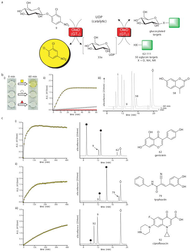 Utilizing a colorimetric screen for glycosyl transfer. ( a ) Scheme for colorimetric screen using the single enzyme (TDP-16) coupled format. ( b ) Evaluation of the colorimetric assay with 58 as the final acceptor. The reactions contained 0.5 mM 9 as donor, 0.5 mM 58 as acceptor, 5 μM UDP, and 11μM TDP-16 in a final total volume of 100 μl with Tris-HCl buffer (50 mM, pH 8.5) in a 96-well plate incubated at 25°C for one hour. ( i ) Qualitative color change after one hour for the full reaction (yellow square), a control lacking the final acceptor 58 (white circle), and a control lacking UDP (red triangle). ( ii ) Δ410 nm over one hour for the full reaction (yellow squares), a control lacking the final acceptor 58 (white circles), and a control reaction lacking UDP (red triangles). ( iii ) HPLC chromatograms of full reaction at 1, 5, and 60 min where 1 is desired product, 9 is the donor, 58 is the target aglycon and ⋄ represents 2-chloro-4-nitrophenolate. (c) The absorbance data and HPLC chromatograms of three representative hits [( i ) 62 (genistein), ( ii ) 79 (tyrphostin), or ( iii ) 92 (ciprofloxacin)] from the broad 50 compound panel screen using the single enzyme (TDP-16) coupled format. In HPLC chromatograms 9 indicates donor; 62 , 79 or 92 represent target aglycon; ⋄ indicates 2-chloro-4-nitrophenolate; and ● depicts glucosylated product(s). For the overall results of the 50 compound screen, additional representative absorbance plots and chromatograms, and combined HPLC and LC/MS characterization, see Supplementary Fig. 19–21 and Supplementary Table 6 .