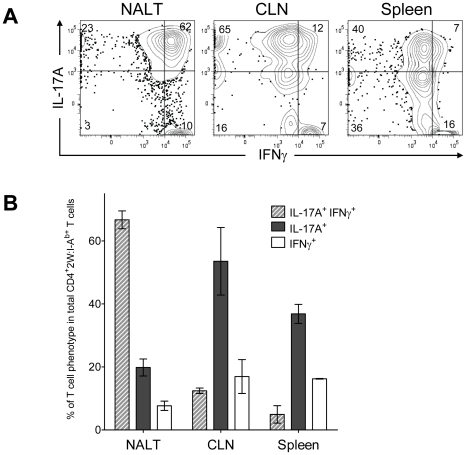 Recurrent GAS infection shifts the cytokine profile of CD4 + 2W:I-A b+ T cells to IL-17A + , IFN-γ + population in NALT. (A) B6 mice were inoculated intranasally with 2×10 8 CFU at weekly intervals for 12 weeks. CD4 + CD44 Hi 2W:I-A b+ T cells from Spleens, CLNs and NALT of infected mice were restimulated in vitro with PMA and ionomycin, stained and analyzed for IL-17A and IFN-γ and analyzed by flow cytometry. Representative result from one of two independent experiments is shown. (B) Pooled results of two independent experiments shown. (n = 4).