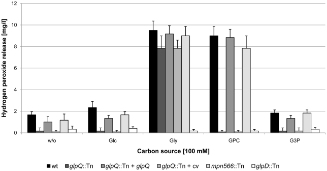 Examination of M. pneumoniae hydrogen peroxide release. Hydrogen peroxide production of M. pneumoniae mutant strains was measured in the presence of different carbon sources (100 µM) after 2 h. The following strains were used: wild type (wt), glpQ ::Tn, mpn566 ::Tn, and glpD ::Tn, glpQ ::Tn + glpQ (complemented mutant) and glpQ ::Tn + cv (control strain carrying the empty vector used for complementation). Error bars indicate standard deviation (based on three independent experiments). G3P, <t>glycerol-3-phosphate;</t> GPC, glycerophosphocholine; Glc, glucose; Gly, glycerol; w/o, without addition of any carbon source.