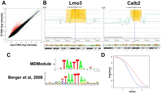 ChIP-chip results obtained from Arx-transfected N2a cells. A) Graph representing log 2 probe intensities of Arx-immunoprecipitated DNA (IP) and input DNA obtained in a representative ChIP experiment. The red dots indicate the probes enriched in Arx-immunoprecipitates compared to total input DNA. B) Examples of the enrichment profiles of Arx-bound promoter regions visualized by DNA analytics software. The 3 lines represent data obtained from 3 independent ChIP-chip experiments and show the reproducibility between the 3 replicates. C) The resulting weighted matrix discovered through the MDModule analysis (top) appears to be similar to the motif identified by Berger et al. [27] (bottom). D) Frequency distribution of scores. The TAATTA motif identified by MDModule was significantly more present in ChIP-enriched sequences (red curve) by comparison to negative control sequences (blue curve).