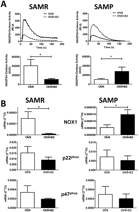 NAD(P)H-dependent O 2 - production in aorta from young (SAMR) and aged (SAMP) females. (A) On top: Representative chemiluminescence tracing of NADPH-dependent O 2 − production in SAMR and SAMP mice. On the bottom bar graphs represent mean ± SEM of the areas under the curve obtained from 6–8 individual experiments. (B) mRNA expression of the NAD(P)H oxidase subunits in mice aorta normalized to the expression of ribosomal RNA subunit 18S, used as an endogenous control. OVX, ovariectomized; OVX+E2, ovariectomized treated with estrogen. Each data represents the mean ± SEM derived from 6–8 independent experiments. * p