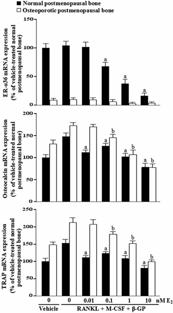 ER-α36 mediates postmenopausal low-level E 2 -induced inhibition of bone resorption and formation in cultured bone tissues. Normal or osteoporotic postmenopausal bone tissues were cultured in a medium containing 10% FBS and treated with vehicle, bone turnover–stimulating factors (50 ng/mL RANKL + 25 ng/mL M-CSF + 10 mM β-GP), or bone turnover–stimulating factors with various concentrations of E 2 for 28 days. mRNA levels of ER-α36, osteocalcin, and TRACP were determined using qRT-PCR and given as fold induction relative to vehicle-treated normal postmenopausal bone. The bars represent the mean ± SD. a p