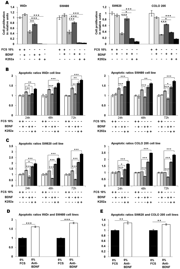 BDNF-TrkB promotes the cell survival of CRC cell lines. (A) Role of endogenous BDNF and its receptor TrkB on CRC cell proliferation: effects of exogenous BDNF and suppressing endogenous TrkB receptor on cell proliferation. The four cell lines were cultured for 24 h in FCS-free medium (FCS 10%, −) in the presence of exogenous BDNF (+), K252a (+) alone or in combination. Cell proliferation was determined by flow cytometry analysis using EdU Alexa Fluor 488. The data are presented as histograms of proliferating cells in relative units ± SEM of five independent experiments. *, p
