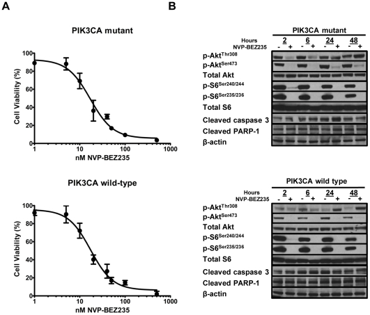 Effects of NVP-BEZ235 on cell viability and PI3K/mTOR signaling are independent of PIK3CA status. (A) Cell viability of mutant and wild-type isogenic PIK3CA cells was assessed by MTS assay after treatment with increasing concentrations (0–500 nM) of NVP-BEZ235 for 48 hours. Results shown are the mean of four independent experiments. (B) Western blot analysis for p-AKT Thr308 , p-AKT Ser473 , p-S6 Ser240/244 , p-S6 Ser235/236 , cleaved caspase 3, and cleaved PARP was performed after 2, 6, 24, and 48 hours incubation with (−) 0 or (+) 500 nM NVP-BEZ235.