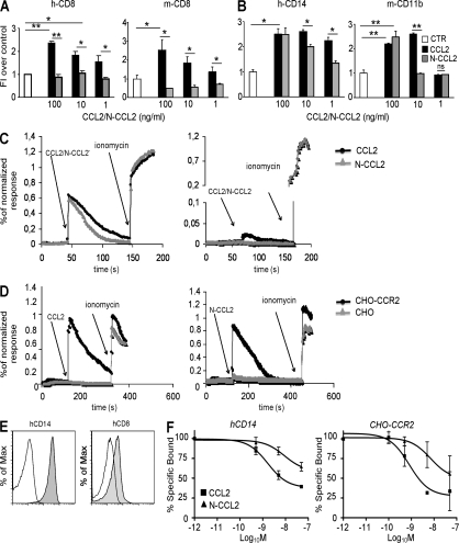 RNS alter the biological activity of human and mouse CCL2. (A and B) Human or mouse CD8 + T lymphocytes (A) and human CD14 + or mouse CD11b + myeloid cells (B) were exposed to a gradient of recombinant human or mouse CCL2 (100, 10, or 1 ng/ml). Chemokines were either untreated (CCL2) or RNS treated (N-CCL2). Transmigrated cells were counted, and the results were expressed as fold induction over control. Data are representative of three different experiments and are expressed as the means ± SE. *, P ≤ 0.05; **, P ≤ 0.01. (C and D) Fluo-4/Fura-Red–loaded human T cells (CD14 + or CD8 + ; A) or CHO cells that were or were not expressing human CCR2 (CHO or CHO-CCR2; D) were stimulated with either CCL2 or N-CCL2 and free [Ca 2+ ]i was measured by flow cytometry. Ionomycin was used as a positive control for the maximal Ca 2+ influx. Data are representative of one out of three experiments. (E) Human CD8 + and CD14 + cells were stained with either anti–human CCR2 phycoerythrin-conjugated mAb or with its isotypic control. Cell fluorescence was analyzed by flow cytometry. The mean fluorescence intensity, normalized to isotype control staining, was 13.2 ± 1.7 and 2.3 ± 0.3 for hCD14 and hCD8 cells, respectively (P ≤ 0.05). (F) Competitive binding was performed by incubating CD14 + cells or CHO-CCR2 cells with 125 I-hCCL2 in the presence of various concentrations of unlabeled, untreated (▪), or peroxynitrite-treated (Δ) hCCL2. After incubation, the cell-associated radioactivity was measured. Data are representative of three different experiments and are expressed as the means ± SE.