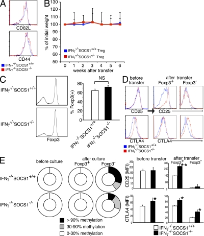 IFN-γ suppresses CNS2 methylation and Foxp3 loss in SOCS1-deficient T reg cells. (A) Expression profiles of CD62L and CD44 on CD3 + CD4 + CD25 bright cells of the LN cells from Ifnγ −/− Socs1 +/+ and Ifnγ −/− Socs1 −/− mice. (B–D) 2 × 10 5 T reg cells from Ifnγ −/− Socs1 +/+ mice or Ifnγ −/− Socs1 −/− mice were transferred into Rag2 −/− mice. 6 wk after transfer, recipient mice were analyzed. (B) Body weight changes. (C) Flow cytometric analysis of Foxp3 expression on CD3 + CD4 + T cells from the LN in Rag2 −/− mice (percentage of Foxp3 + indicated in bar graph). (D) CD25 and intracellular CTLA4 expression on CD3 + CD4 + Foxp3 + cells and Foxp3 − cells from the LN in Rag2 −/− mice (right) compared with those on CD3 + CD4 + CD25 bright cells before transfer (left; mean fluorescent intensity [MFI] indicated in bar graph). Data are representative of three independent experiments (*, P