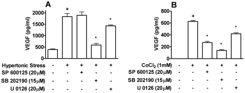 Role of MAPKs in VEGF production by Caco-2 cells. Inhibitors of JNK, SP600125; p38, SB202190; and MEK 1/2, U0126 were added before stimulation with hypertonic stress (100 mM NaCl) ( A ) or 1 mM CoCl 2 ( B ) for 24 h. Caco-2 cells were pretreated with 1 µM of NS-398 to prevent endogenous PGE 2 production in all samples. VEGF production was determined by ELISA in supernatants of Caco-2 cells. +, * p