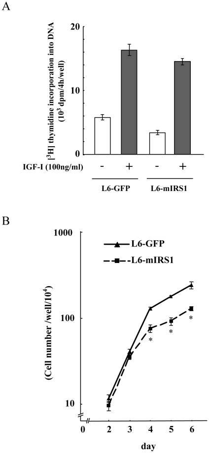 Effects of IRS-1 constitutive expression on cell growth. A: [Methyl- 3 H] thymidine incorporation into DNA was measured during the last 4 h of IGF-I treatment time. The mean ± SEM of three replicate dishes is shown. B: 3×10 3 cells of L6-GFP control or L6-mIRS1 cells were inoculated in 35 mm dishes. Cells were grown in DMEM containing 10% FBS and cell number was counted in each day. *, difference between L6-GFP control cells and L6-mIRS1 cells is significant with p