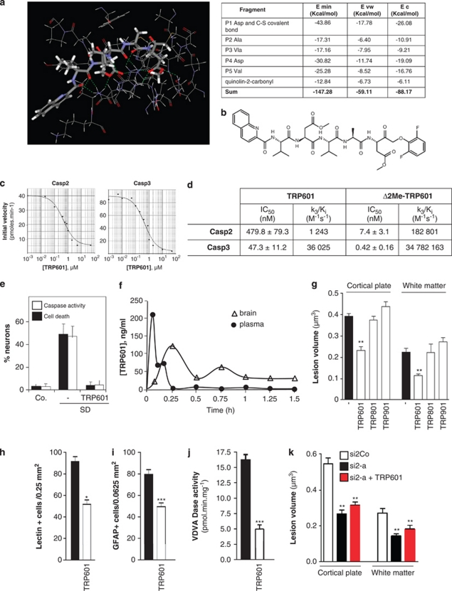 Design and pharmacological evaluation of TRP601. ( a ) Substrate binding region of caspase-2 (Casp2) in complex with TRP601. The quinolin-2-carbonyl-Val-Asp(OMe)-Val-Ala-Asp(OMe)-CH 2 - moiety is shown in sticks representation with the atoms represented as follows: gray=carbon; white=hydrogen; blue=nitrogen; and red=oxygen. The S–C covalent bond between the Cys-155 residue and the C terminus CH 2 of TRP601 is represented in yellow. The electric interactions (hydrogen bonds and salts bridges) are represented by the dashed, green lines. The enzyme residues that interact with the inhibitor are shown by the wireframe representation. Right panel: the table shows the minimal energy (kcal/mol, E min ) of the Casp2–TRP601 complex resulting from electric or Coulombic component ( E c ) together with repulsion–attraction component ( E vw ). The interaction energy of the Casp2–TRP601 complex is −147.28 kcal/mol. Owing to the C–S covalent bond, the Asp residue in P1 contributes to about 30% of the interaction energy. The Asp in P4 and the Val in P5 have important non-covalent contributions to stabilization of the complex, 21% and 17%, respectively. Each of the other two residues (Ala in P2 and Val in P3) contributes to about 12% of the interaction energy. ( b ) Structure of TRP601. ( c ) Representative dose–response curve of human recombinant Casp2 and <t>Casp3</t> inhibition by TRP601. Initial velocities were determined from standard colorimetric microplate assays. ( d ) Kinetic off rate (k 3 / K i ) parameters of irreversible caspase inhibitors on Casp2 and Casp3. ( e ) TRP601 inhibits neuronal caspase activities and prevents serum deprivation (SD)-induced cell death. High-density E14 cortical neuron cultures were subjected to 24 h SD in the presence or absence of 50 μM TRP601. Histograms indicate the means (±S.D.) of 15 independent experiments. ( f ) Representative pharmacokinetic of TRP601 after intravenous (i.v.) administration in adult rats, through liquid chromatography-m