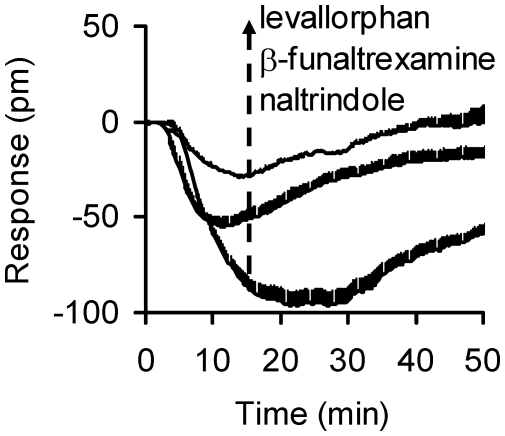 The DMR signals induced by levallorphan, β-funaltrexamine, and naltrindole in the DAMGO-activated HEK-MOR cells. Each curve represents the average of duplicates.