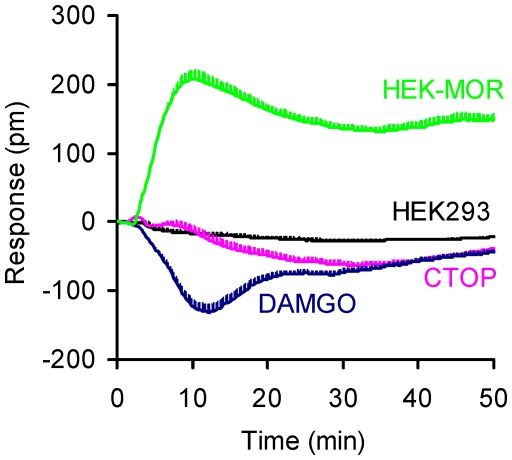 The ICI 199441-induced DMR in distinct molecule-treated cells. The cells were HEK-293 cells (HEK293), HEK-MOR (HEK-MOR), or CTOP- (CTOP), or DAMGO- (DAMGO) pretreated HEK-MOR cells. Each curve represents the average of duplicates.