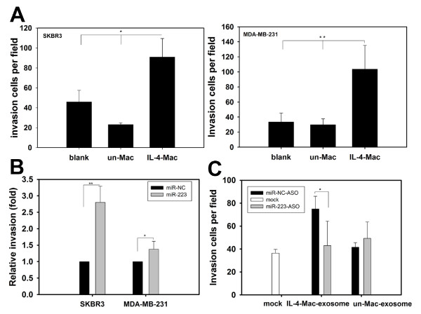 Exosomal shuttling of miR-223 from macrophages to breast cancer cells promotes breast cancer cell invasion . (A) IL-4-activated macrophages promote breast cancer cell invasion. The breast cancer cell lines SKBR3 and MDA-MB-231 were cultured alone (blank) or co-cultured with unactivated or IL-4-activated macrophages. Approximately 24 to 48 h after co-culture, SKBR3 and MDA-MB-231 cells were subjected to an invasion assay. Data are averages of triplicates from more than three independent experiments and are presented as the number of invading cells per field. (B) miR-223 mimics enhanced the invasion of SKBR3 and MDA-MB-231 breast cancer cells. miR-223 was transfected into SKBR3 and MDA-MB-231 cells. Cell invasion was then determined by a transwell invasion assay. Relative invasion activities are presented as fold increases in the miR-223 group. The miR-NC group was normalized to 1.0. (C) Exposure to exosomes derived from macrophages resulted in similar effects on breast cancer invasion as the actual macrophages. SKBR3 cells were incubated with exosomes derived from unactivated or IL-4-activated macrophages and then treated with miR-NC ASO or miR-223 ASO. Cell invasion assays were performed as shown in (A). Data are averages of triplicates from three independent experiments and are presented as the number of invading cells per field. * p
