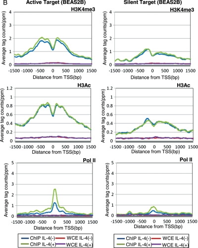 Status of histone modifications and pol II binding in the proximal regions of STAT6 target TSSs. (A) Distribution of the averaged ChIP Seq tags for H3K4me3 (top panels), H3Ac (middle panels) and pol II (bottom panels) in Ramos cells. Data from active target genes (STAT6 binding plus TSS induction in Ramos cells) are shown in the left panels, and data from silent target genes (STAT6 binding plus TSS induction in BEAS2B cells but both negative in Ramos cells) are shown in the right panels. Blue, green, red and purple lines indicate the results for the IP (IL-4 (+)), IP (IL-4 (−)), WCE (IL-4 (+)) and WCE (IL-4 (−)) experiments, respectively. On the x -axis, the position of the associated TSS is designated as zero. (B) Results of an analysis similar to that shown in (A) in BEAS2B cells.