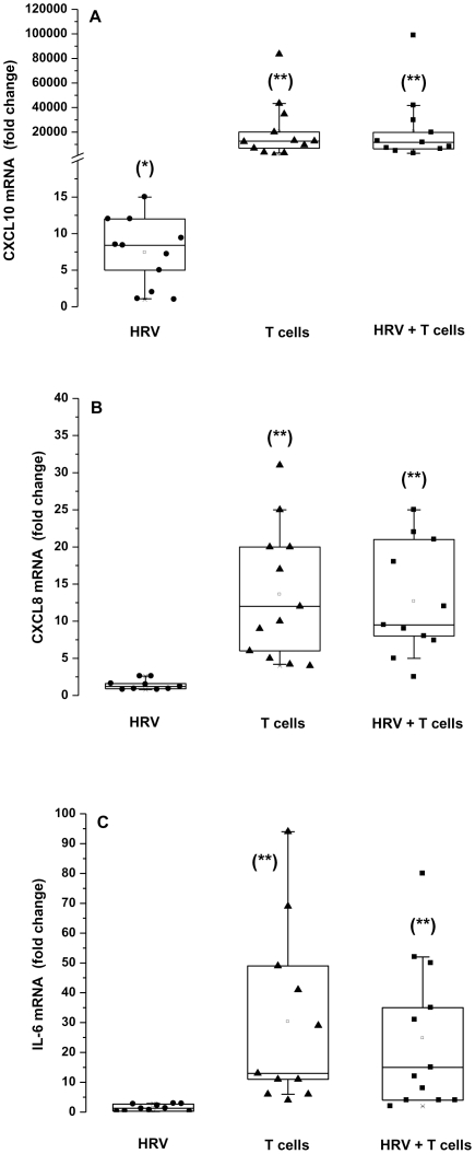 Epithelial CXCL10 mRNA is induced by HRV14 and T cells, CXCL8 and IL-6 mRNA are induced only by T cells. HNEC were exposed apically to HRV14 alone (HRV), or co-cultured with activated T cells alone (T cells), or exposed to HRV14 washed thoroughly then co-cultured with activated T cells (HRV+T cells). The expression of CXCL10 mRNA (A), CXCL8 mRNA (B) and IL-6 mRNA (C) was determined by real-time PCR. Data represent the fold increase relative to non-infected cells cultured in the absence of T cells. Shown are the boxplots with the 25 th , 50 th (median), 75 th percentiles, the mean (open square), the maximum and the minimum values. *p
