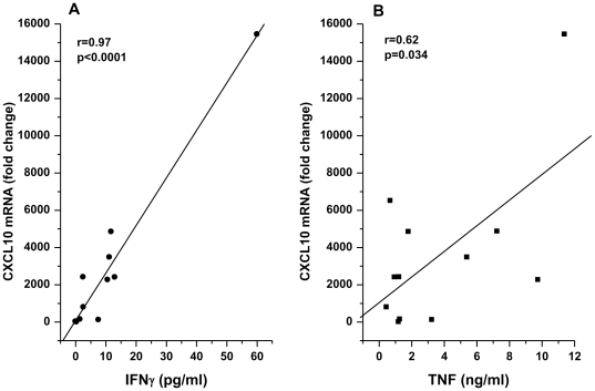 Epithelial CXCL10 mRNA induction is proportional to the amounts of IFNγ and TNF produced by T cell clones. HNEC were co-cultured with T cell clones obtained from PBMC of a normal individual. CXCL10 mRNA induction is expressed as a function of IFNγ (A) and TNF (B) secreted by T cell clones in the culture medium. Epithelial CXCL10 mRNAs are measured by real-time PCR and expressed as fold increase relative to those measured in epithelial cells cultured without T cells. IFNγ and TNF were measured by TenPlex bead immunoassay and ELISA.