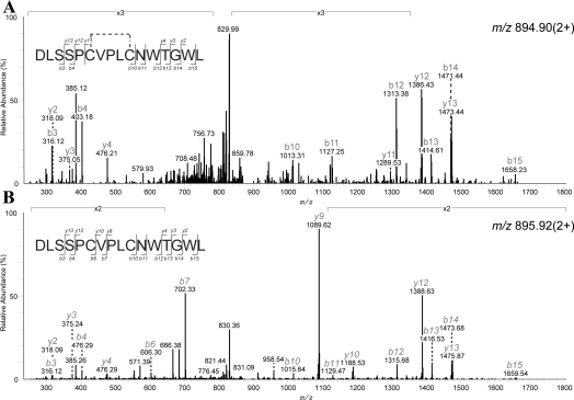 LC-ESI MS/MS analysis of the CysD peptide with a C-mannosylation motif A CysD-IgG-containing band from a non-reduced SDS gel was excised, in-gel digested with Asp-N and analysed by LC-ESI MS/MS. CID-fragmentation spectra of the CysD peptide DLSSPCVPLCNWTGWL in ( A ) with an intact disulfide bridge and in ( B ) after reduction with TCEP-HCl. Both fragmentation spectra showed the absence of C-mannosylation on the first tryptophan residue of the WXXW peptide motif.