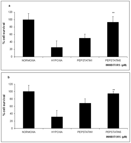 Effect of 16 hours Oxygen-Glucose Deprivation (OGD) on % survival of PC12 cells in the absence or presence of different concentrations of the aspartyl protease inhibitor pepstatin A (1 µM and 5 µM). The values are presented as mean ± SEM, *p