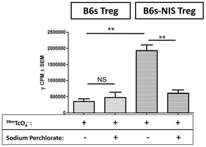 B6s-NIS Tregs uptake 99m TcO 4 − in vitro . 1×10 6 B6s or B6s-NIS Tregs were incubated in Hank's Balanced Salt solution supplemented with 1 MBq of 99m TcO 4 − . Sodium Perchlorate (100 µM) was used to block the 99m TcO 4 − uptake by B6s-NIS Treg line. **, P