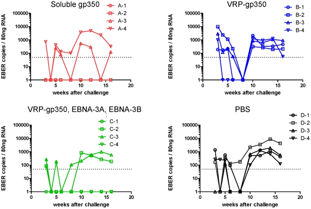 Detection of rhesus LCV EBER1 in the blood of monkeys immunized with soluble gp350, VRP-gp350, a combination of VRP-350, VRP-EBNA-3A, and VRP-EBNA-3B, or PBS. RNA was isolated from PBMCs and reverse transcription was performed followed by real time PCR with a probe that detects EBER1 DNA.
