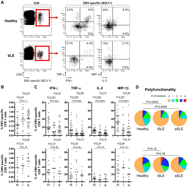 Multiparametric functional assessment of EBV- and CMV-specific CD8 + T cells in SLE patients. ( A ) Representative cytofluorometric detection (left) and functional analysis (right) of CD8 + T cells specific for one of the lytic EBV antigens tested (BZLF1) in a healthy control (upper panel) and in an inactive SLE patient (lover panel) post peptide antigen stimulation of PBMC. Lytic EBV and CMV antigen-specific cells were detected with peptide/MHC tetramer and anti-CD8 antibody (red box) and simultaneously analyzed for intra-cellular IFN-γ, TNF-α, IL-2 and MIP-1β content. <t>Cytokine/chemokine</t> gates were positioned according to control stains of non-stimulated virus-specific T cells. (B) Magnitude and (C) functionality of EBV- (upper panel) and CMV-specific (lower panel) responses in healthy controls (H, n = 26 and 15, respectively), inactive (i, n = 19 and 10) and active (a, n = 27 and 11) SLE patients. (D) EBV-specific T cells (upper panel) are strikingly less polyfunctional in inactive (iSLE) and active (aSLE) SLE patients compared to controls (healthy), while polyfunctionality of CMV-specific responses (lower panel) is preserved. Pie representations of virus-specific CD8 + T cells represent the fraction of individual cells secreting none (0) or any (1, 2, 3 or 4) of the four cytokines IFN-γ, TNF-α, IL-2 and MIP-1β (color coded as indicated). E.g. the red pie slice indicates the proportion of cells producing four cytokines (IFN-γ, TNF-α, IL-2 and MIP-1β). P -values monitoring differences between healthy donors and SLE patients are calculated using a non-parametric Mann-Whitney test and pie comparison statistics of the Spice software.