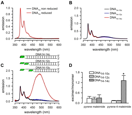 Emission of pyrene compounds reacted with thiol-modified DNA. A. Emission spectra of single-stranded DNA containing a 5′ end thiol group (DNA 14 ) reacted with pyrene-4-maleimide. Data were normalized to peak 1 intensity from reduced DNA 14 . [DNA 14 ] was 0.5 µM, and [pyrene-4-maleimide] was 2 µM. B. Emission spectra of double-stranded DNA reacted with pyrene maleimide. DNA 14-14c : DNA 14 annealed to fully complementary DNA with a 3′ end thiol group (DNA 14c ). DNA 14-12c : DNA 14 annealed to a 3′ end two-base shorter complementary oligonucleotide with a 3′ end thiol group. DNA 14-10c : DNA 14 annealed to a 3′ end four-base shorter complementary oligonucleotide with a 3′ end thiol group. C. Emission spectra of double-stranded DNA reacted with pyrene-4-maleimide. Insert: schematic representation of the experimental system showing the double-stranded DNAs labeled with pyrene-4-maleimide. The pyrenes are represented by green rhomboids. Data in panels B and C were normalized to peak 1 intensity. The labels in panel B also apply to panel C. D. Excimer/monomer emission ratio. The values were calculated as: excimer/monomer = I peak 4 /I peak 1 , where I is the highest intensity of the peak, and peak 1 and peak 4 correspond to the excimer and monomer emission peaks. Averages ± SEM from experiments such as those shown in panels B and C (n = 3 for pyrene maleimide, and n = 4 for pyrene-4-maleimide). The asterisk denotes P