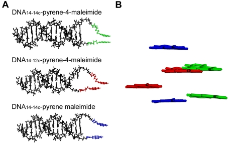 Double-stranded DNA models with pyrene maleimides attached via thiol linkers. A. Stick representation view along the DNA long axis. Pyrene-4-maleimide attached to DNA 14-14c and DNA 14-12c is shown in green and red, respectively. Pyrene maleimide attached to DNA 14-14c is shown in blue. The 5′ thiol was present in the 14-bp long strand in all cases. The 3′ thiol was present in the 14-bp or 12-bp long complementary strands. B. Stick representation view perpendicular to that in panel A. Only the pyrenes are shown for clarity. Color coding as in panel A. See Materials and Methods for details.